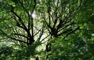 湯島聖堂の緑