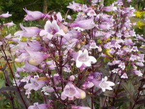 京王フローラルガーデン 花