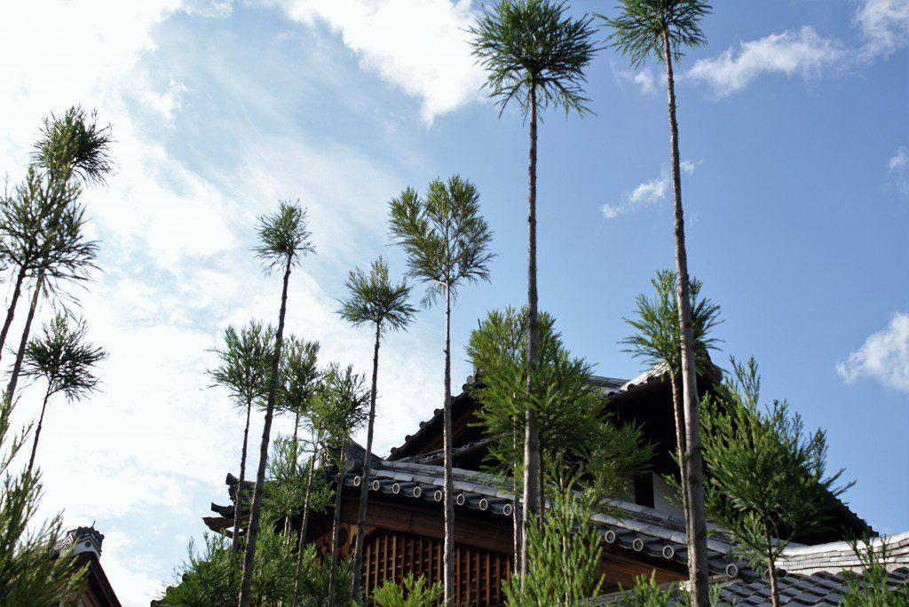 大徳寺 台杉