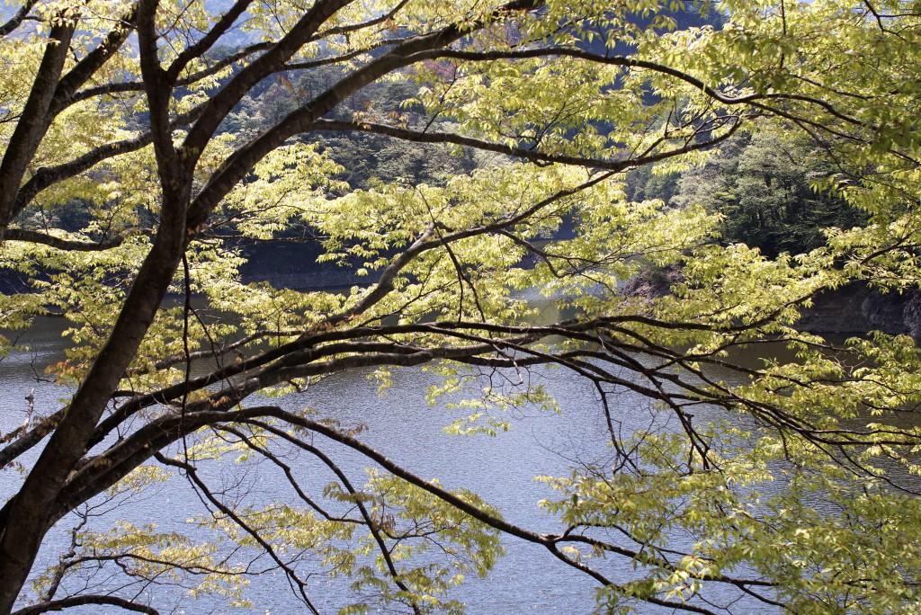 新緑の奥多摩湖