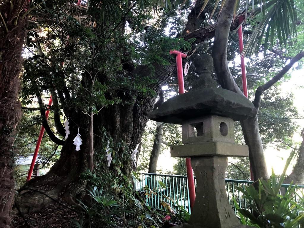 羽村 阿蘇神社 シイ
