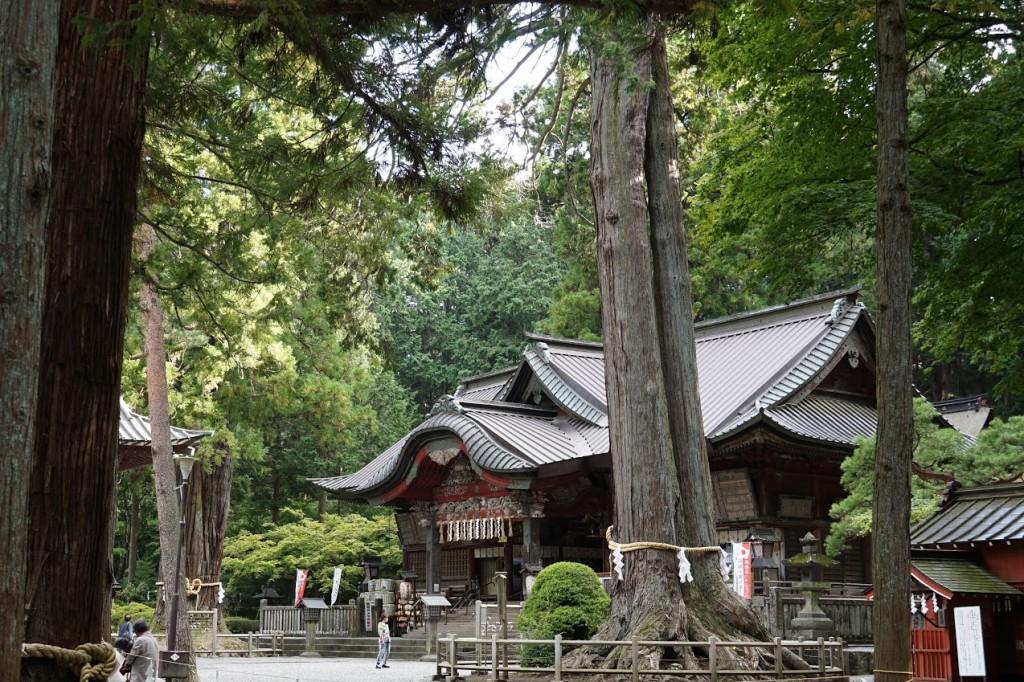 富士浅間神社 夫婦ヒノキ