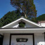 澤乃井 蔵開き 新酒 小沢酒造
